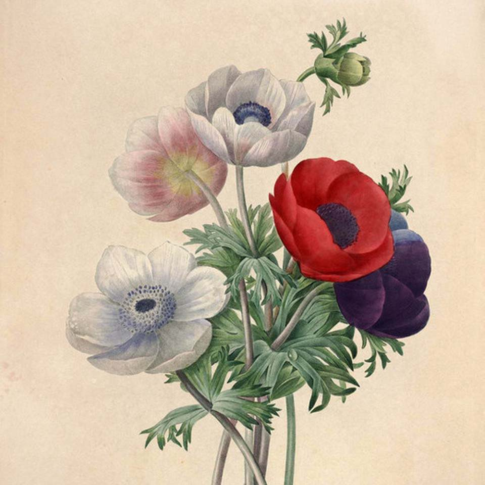 Pierre Joseph Redoute Art