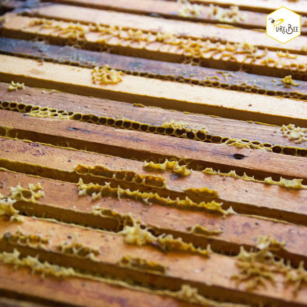 Honeycombs in the hive | PureBee