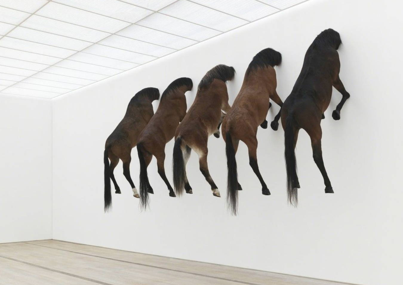 Horse corpses stuck on a wall