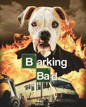 breaking bad dog