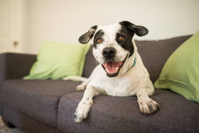 How to Support Your Dog's Gut Health