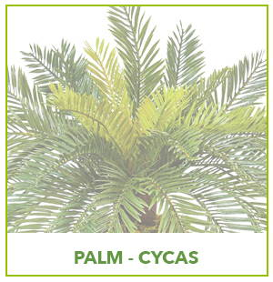 ARTIFICIAL CYCAS PALM PLANTS