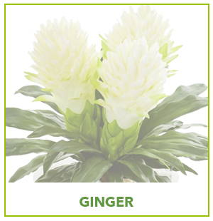 ARTIFICIAL GINGER PLANTS