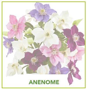ARTIFICIAL ANENOME PLANTS