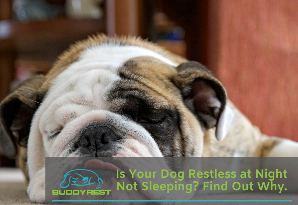 Is Your Dog Restless at Night Not Sleeping? Heres Why