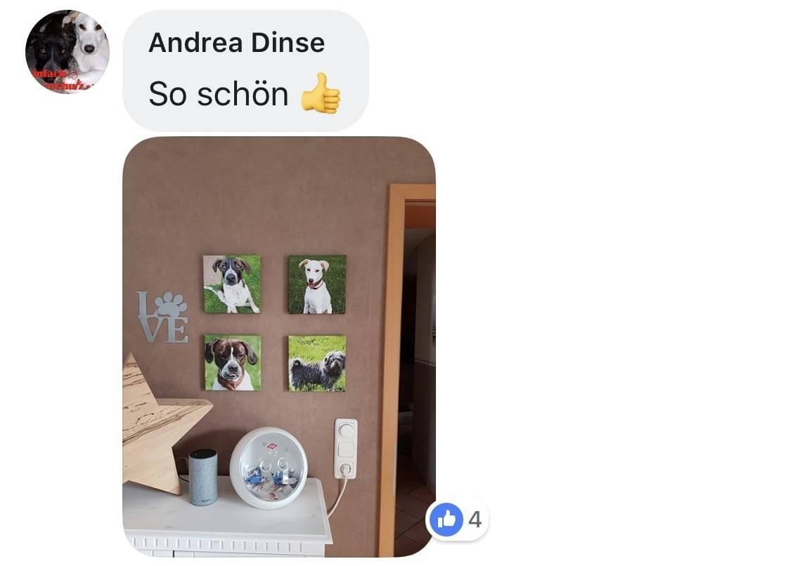 LOVE Schriftzug hergestellt aus hochwertigen gebürsteten Edelstahl, das O ist dargestellt als eine Hundepfote, darauf der Name des Hundes eingraviert, Hundebilder