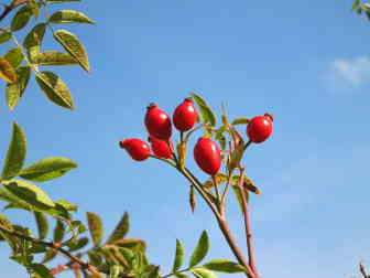 Rosehip oil has tons of antioxidants, reduces wrinkles, and prevents sun damage