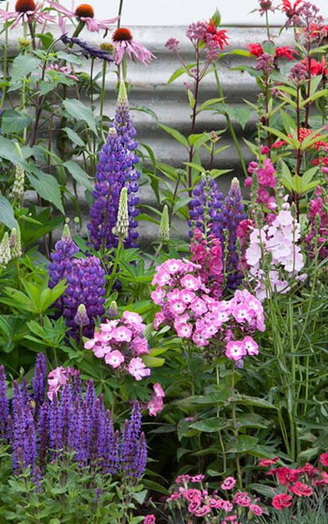 Profusion de fleurs, de couleurs et de senteurs