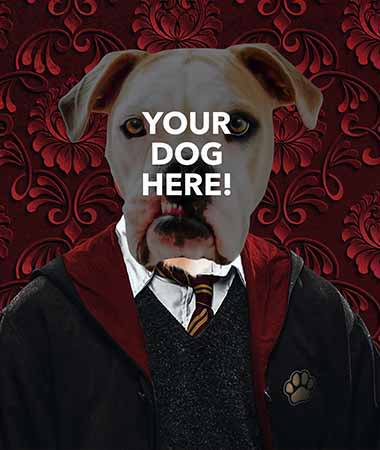 Pop your pups pop icon example on pop culture harry potter inspired background slide 10