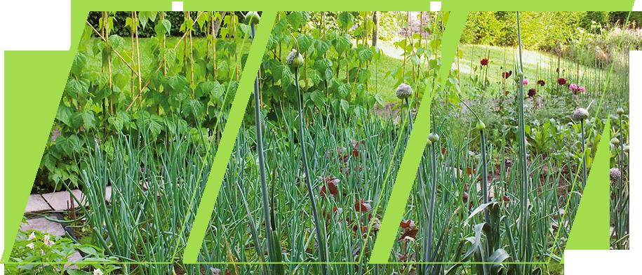 Green plants in a garden
