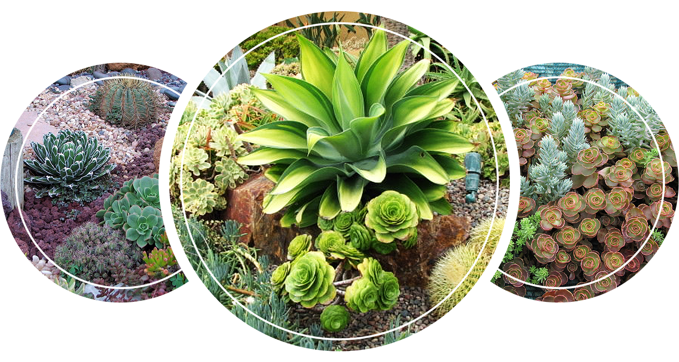 Different kinds of perennial plants