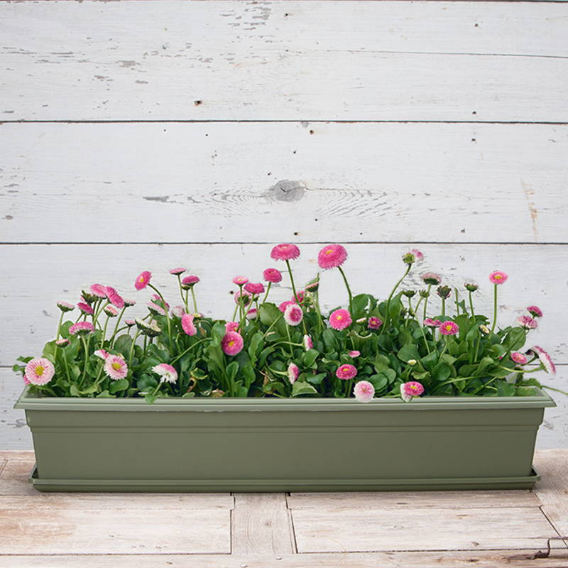 A sage green countryside flower box on top of a sage green countryside flower box tray