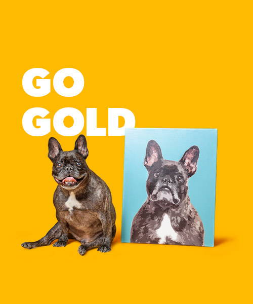 Affiliate gold membership banner with french bulldog