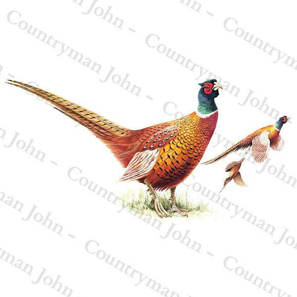 Countryman John Cock Pheasants Artwork - 1003