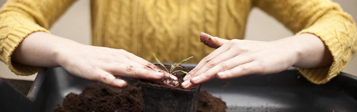 women planting a plant start