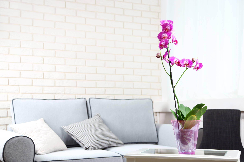 orchidée dans le salon