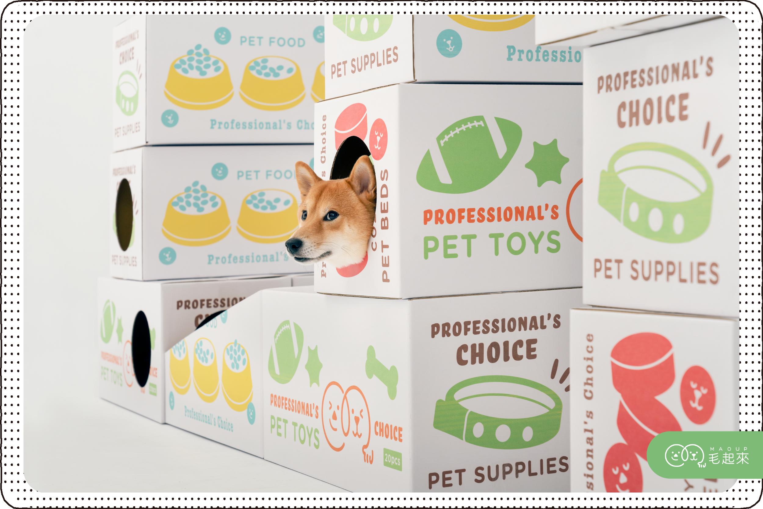 柴犬頭從寵物用品紙箱探出來