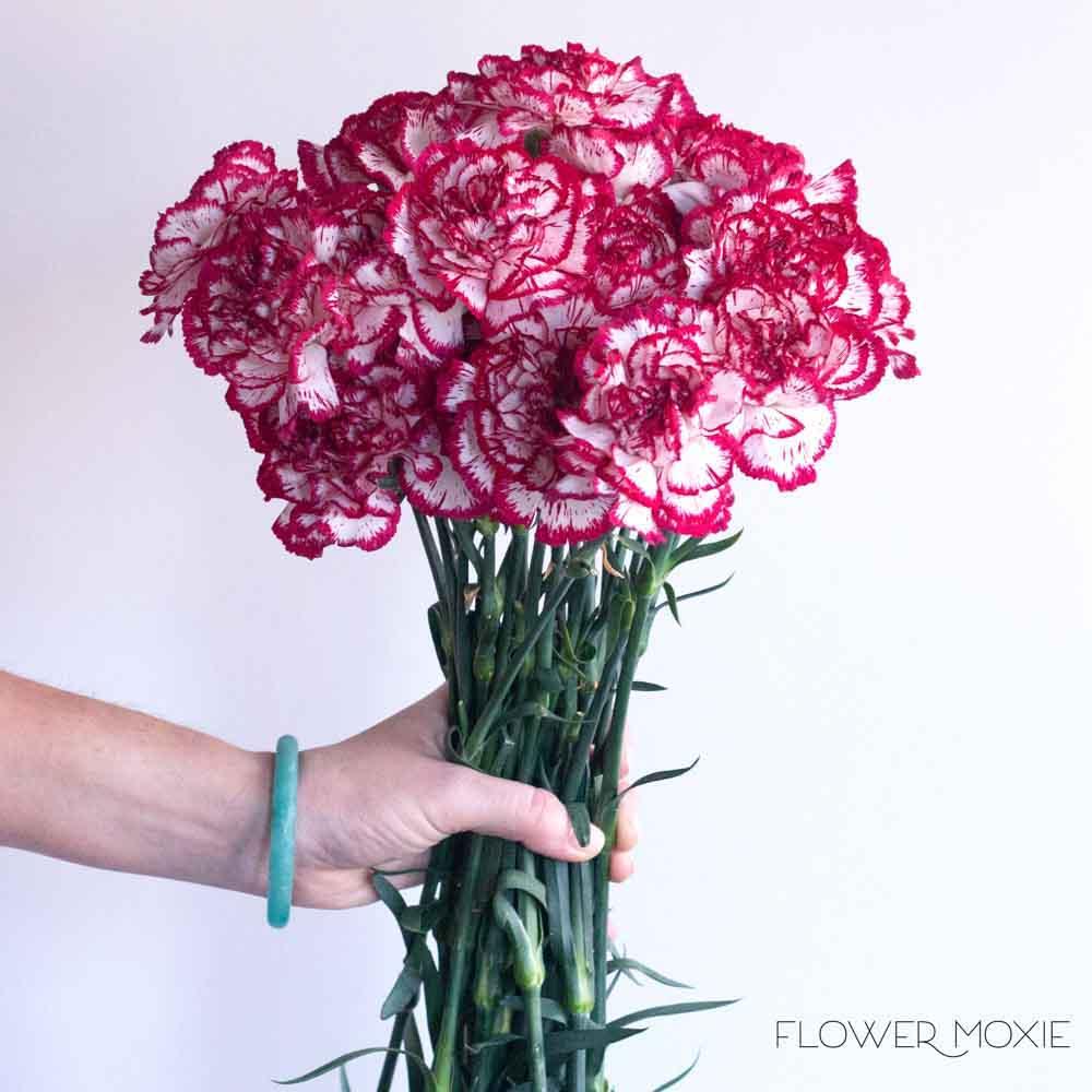 Olympia Burgundy Carnation Flower