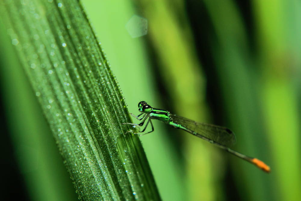 close up picture of dragonfly