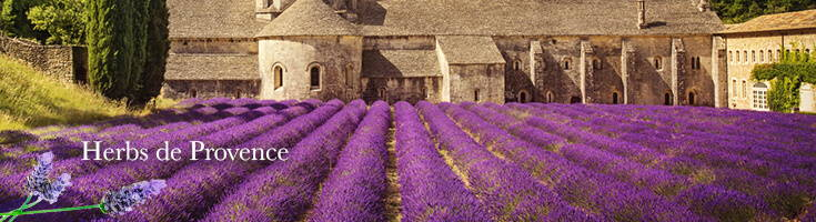 High Quality Organics Express Lavender Field in France