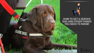How To Get a Service Dog and Other Things You Need to Know!