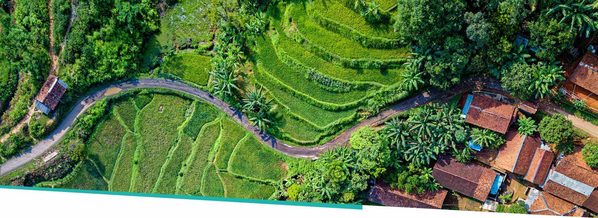 aerial view showing Vietnam bamboo production farm