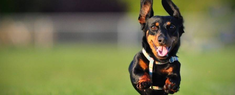 The best joint supplements will give your dog's joints and muscles the support they need