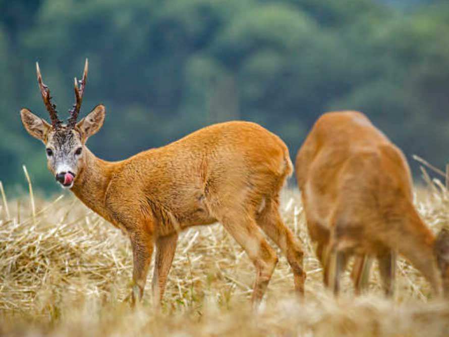 What are the Best Deer Resistant Plants