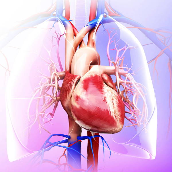 Therasage - Effects of repeated sauna treatment on ventricular arrhythmias in patients with chronic heart failure