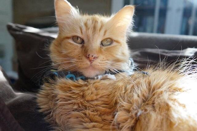 How a Cat Gut Health Remedy Saved a Shelter Cat's Life