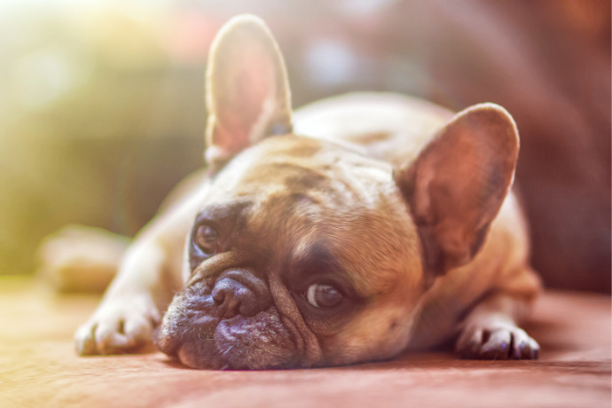 Know This: 5 Tell-Tale Signs That Your Dog Is Bored | Team K9