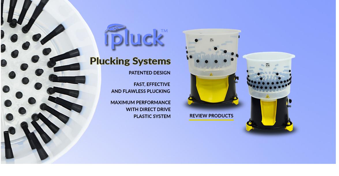 Plucking Machines - Hatching Time