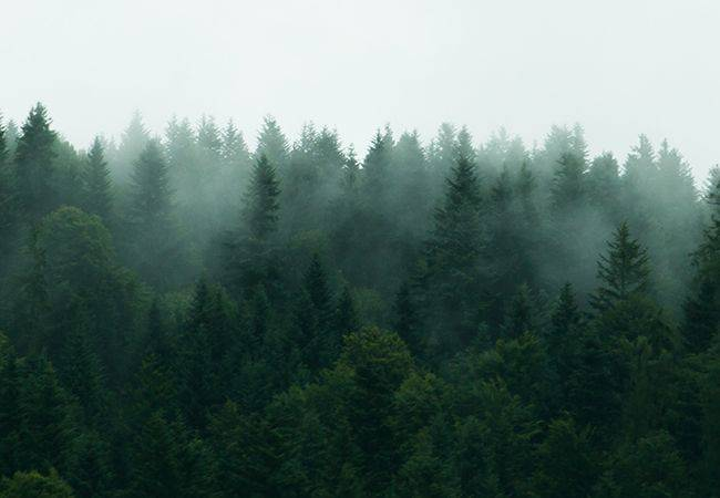 Nomad Botanicals Aromatherapy Lifestyle Products to Transform Routine Moments in Wellness Rituals home page image of a forest in the mist