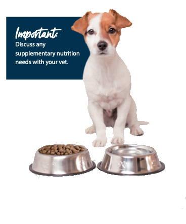 Dog sitting by bowl