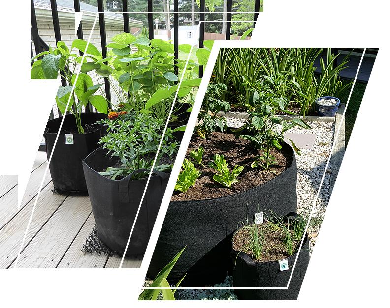 Ecogardener Round Grow bags in the balcony