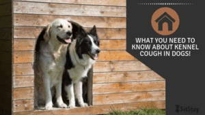 What you need to know about kennel cough in dogs