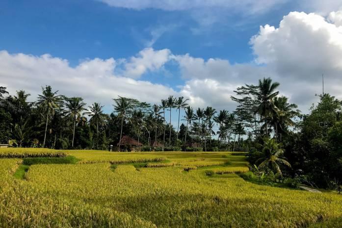 Water Tee built in Bali