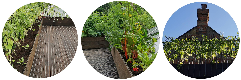 Edible Rooftop Garden In London