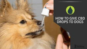 How to give CBD Drops to Dogs