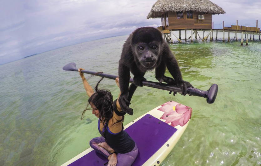 Michelle Caranto On a Lotus Board with a Monkey in Panama