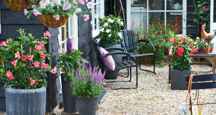 Pot plants on the patio or decking make a colourful display!