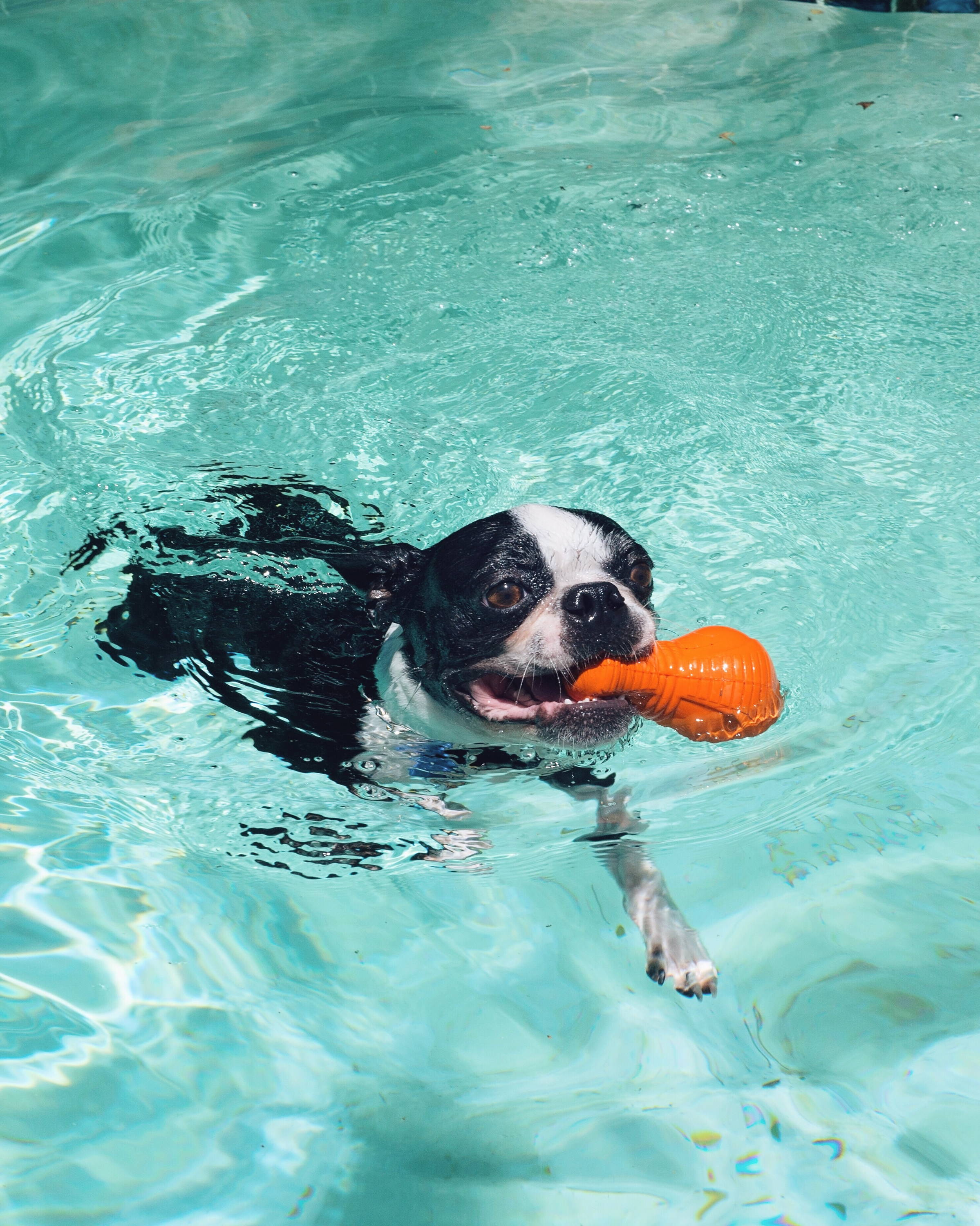 The Importance of Hydrating Your Pet