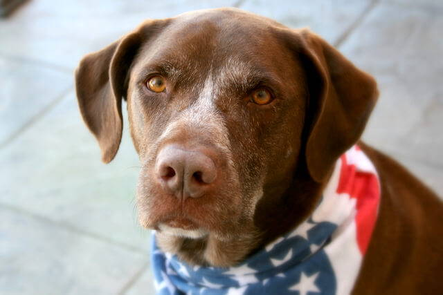 How to Comfort Your Pet During Fireworks