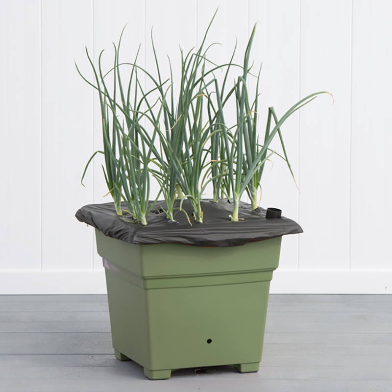 Sage green EarthBox Root & Veg container growing greens