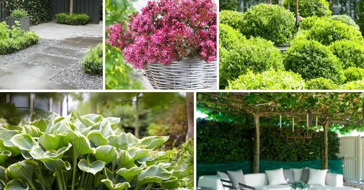 Maintenance Friendly Garden