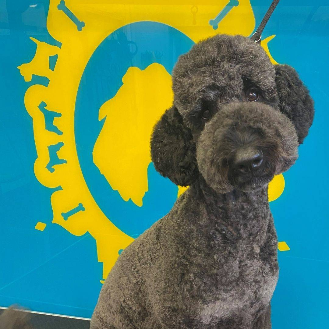 Dog Grooming In Brighton, Hove, Sussex, Creative, Bespoke and custom dog grooming