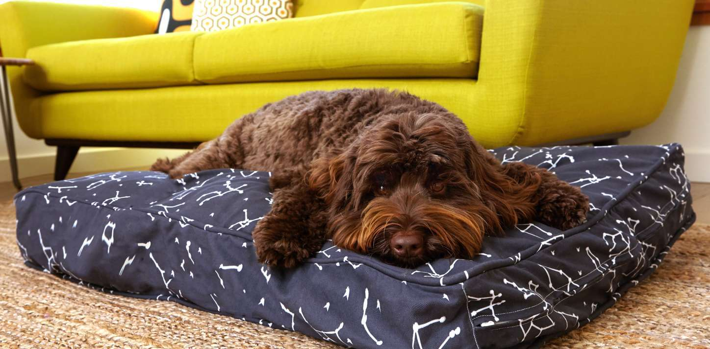 Choosing Between Washable Dog Beds