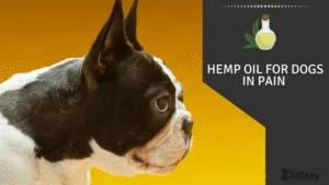 Hemp Oil For Dogs in pain
