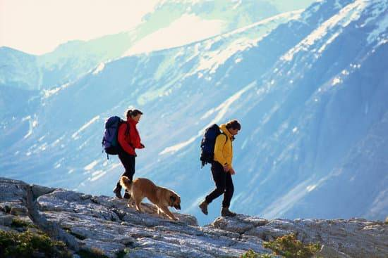 A dog walks along a cliff with two hikers wearing backpacks in the mountains