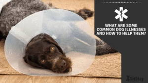 What are some common dog illnesses and how to help them?